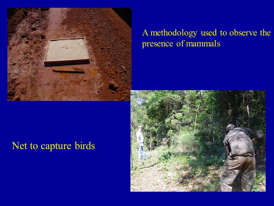 A methodology used to observe the presence of mammals
