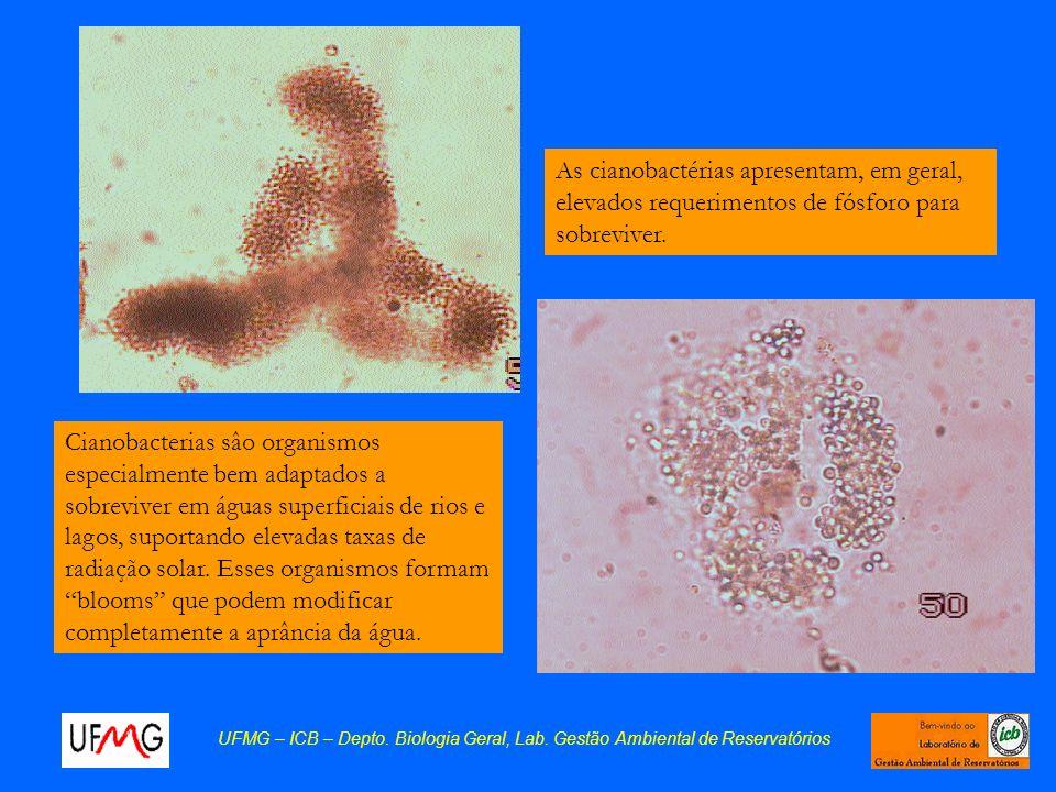 As cianobactérias apresentam, em geral, elevados requerimentos de fósforo para sobreviver.
