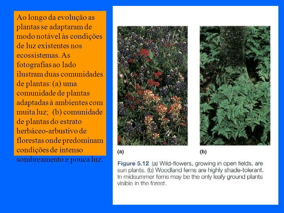 Ao longo da evolução as plantas se adaptaram de modo notável às condições de luz existentes nos ecossistemas.