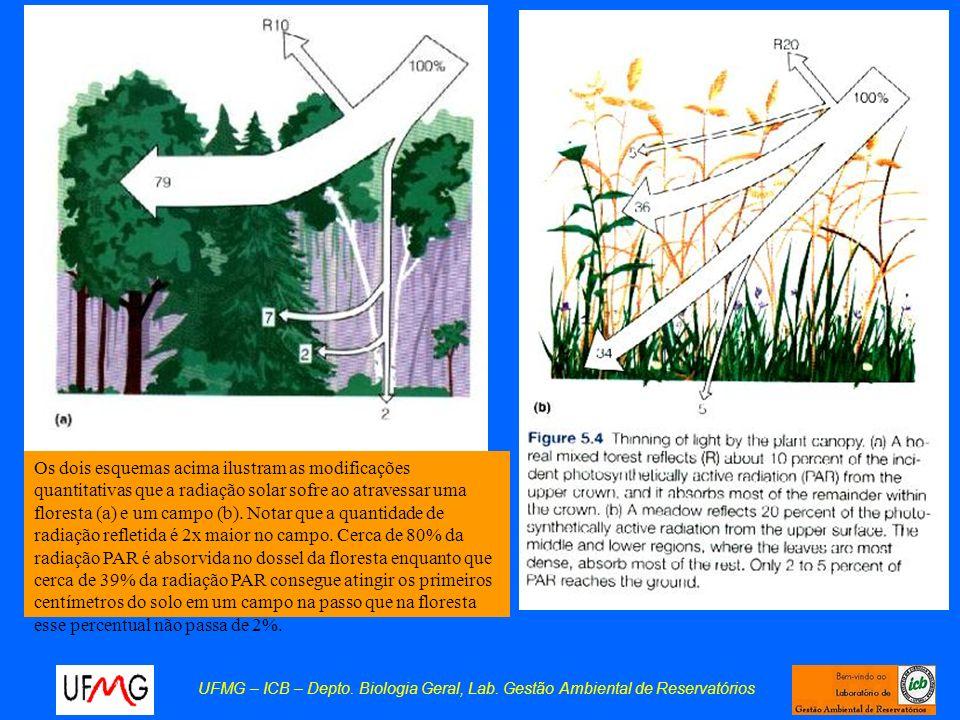 Os dois esquemas acima ilustram as modificações quantitativas que a radiação solar sofre ao atravessar uma floresta (a) e um campo (b). Notar que a quantidade de radiação refletida é 2x maior no campo. Cerca de 80% da radiação PAR é absorvida no dossel da floresta enquanto que cerca de 39% da radiação PAR consegue atingir os primeiros centímetros do solo em um campo na passo que na floresta esse percentual não passa de 2%.