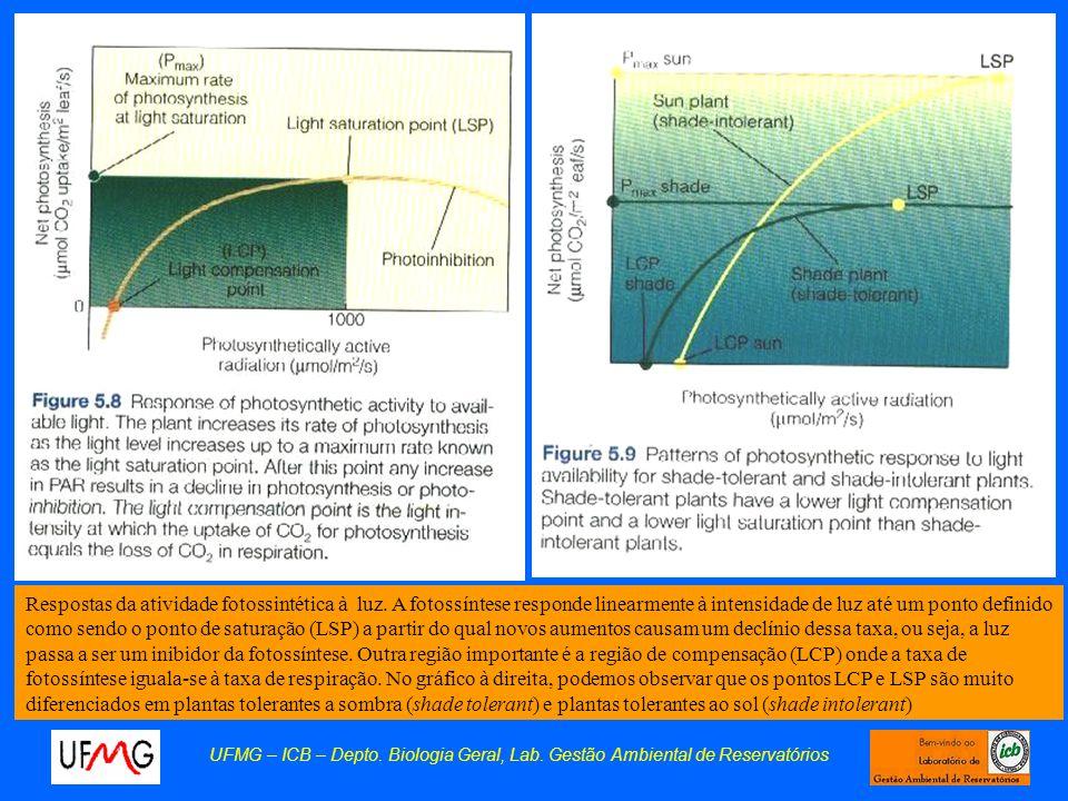 Respostas da atividade fotossintética à luz
