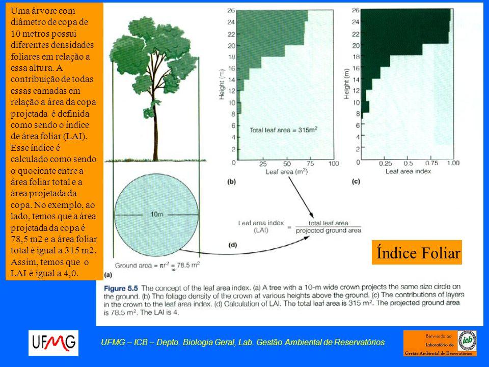Uma árvore com diâmetro de copa de 10 metros possui diferentes densidades foliares em relação a essa altura. A contribuição de todas essas camadas em relação a área da copa projetada é definida como sendo o índice de área foliar (LAI). Esse índice é calculado como sendo o quociente entre a área foliar total e a área projetada da copa. No exemplo, ao lado, temos que a área projetada da copa é 78,5 m2 e a área foliar total é igual a 315 m2. Assim, temos que o LAI é igual a 4,0.