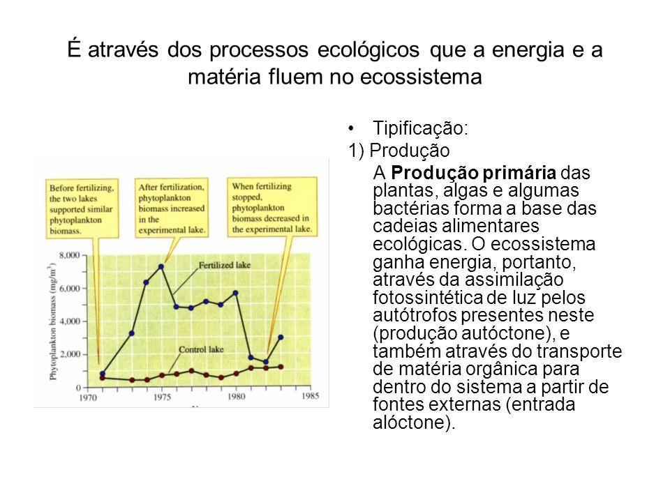 É através dos processos ecológicos que a energia e a matéria fluem no ecossistema