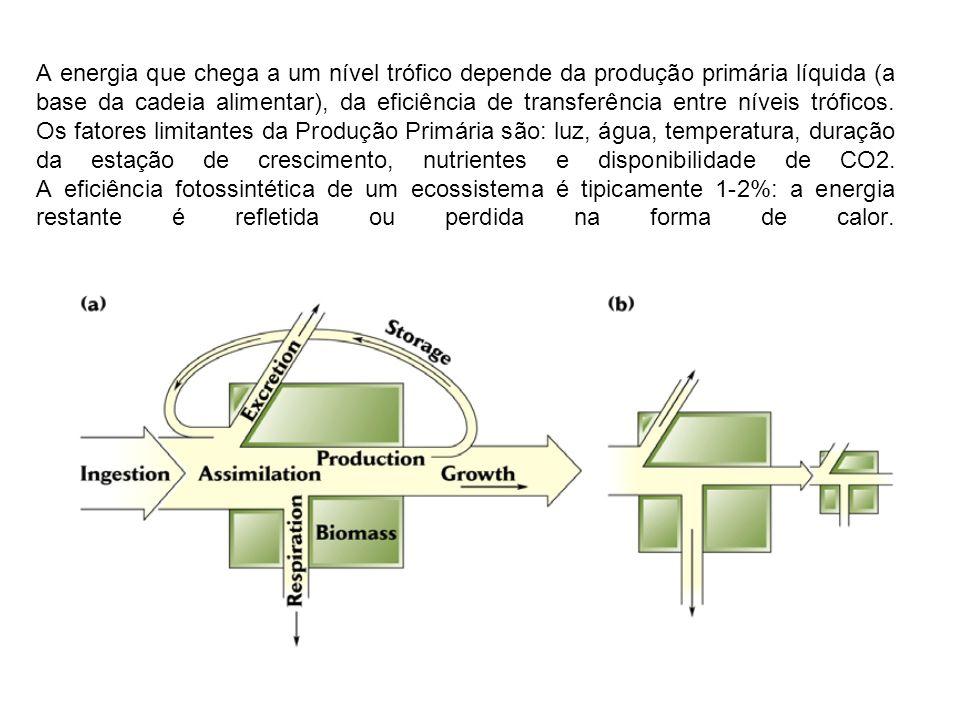A energia que chega a um nível trófico depende da produção primária líquida (a base da cadeia alimentar), da eficiência de transferência entre níveis tróficos.