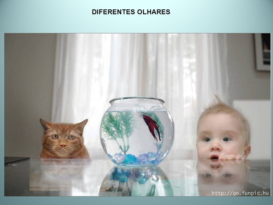 DIFERENTES OLHARES