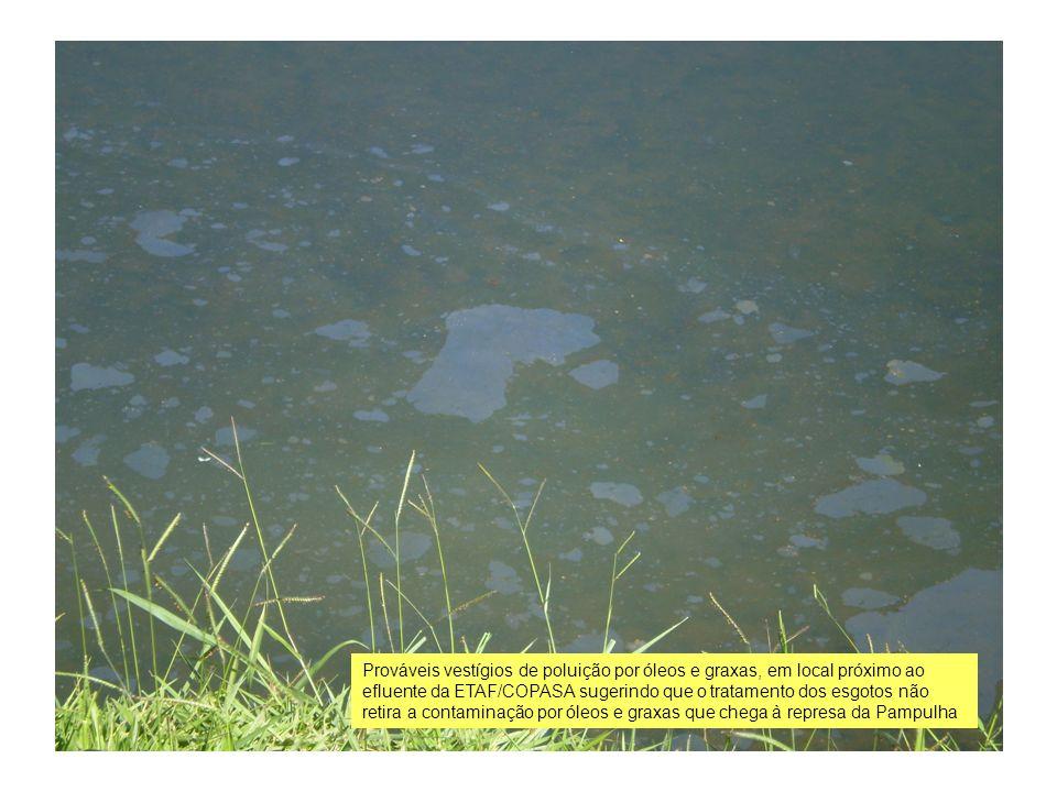 Prováveis vestígios de poluição por óleos e graxas, em local próximo ao efluente da ETAF/COPASA sugerindo que o tratamento dos esgotos não retira a contaminação por óleos e graxas que chega à represa da Pampulha