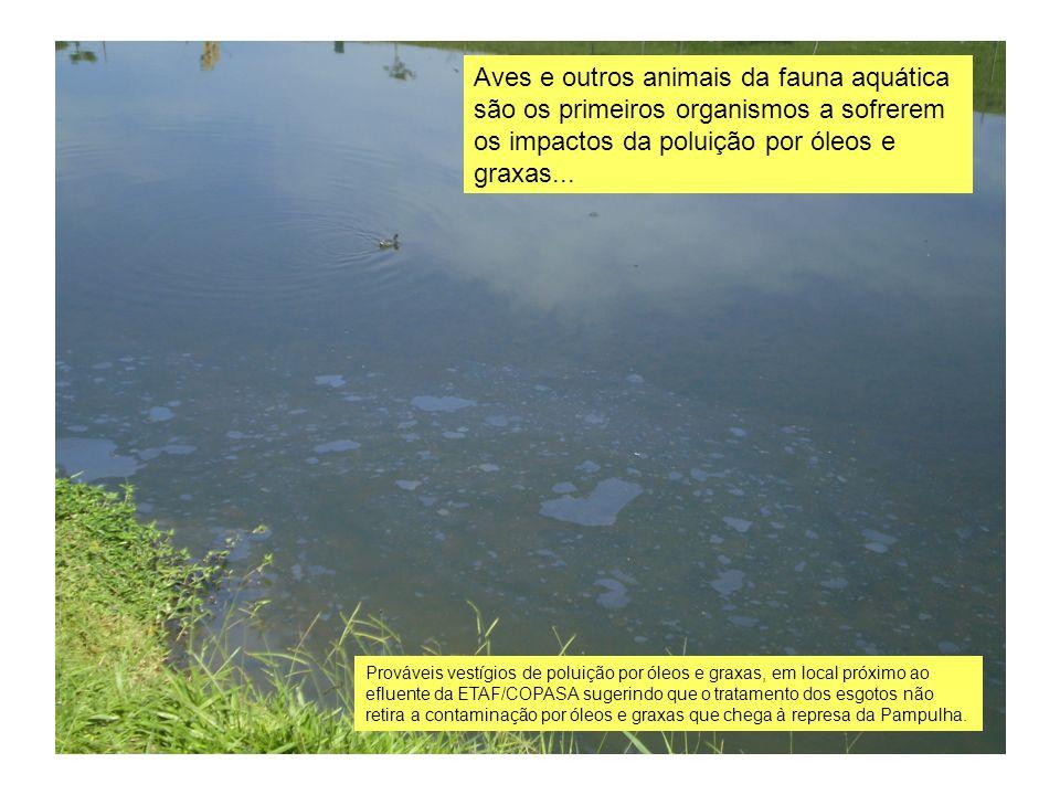 Aves e outros animais da fauna aquática são os primeiros organismos a sofrerem os impactos da poluição por óleos e graxas...