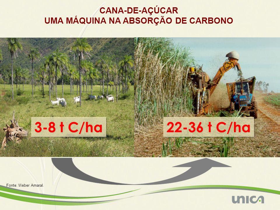 CANA-DE-AÇÚCAR UMA MÁQUINA NA ABSORÇÃO DE CARBONO