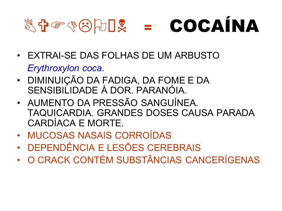 BVFDLOÍN = COCAÍNA EXTRAI-SE DAS FOLHAS DE UM ARBUSTO