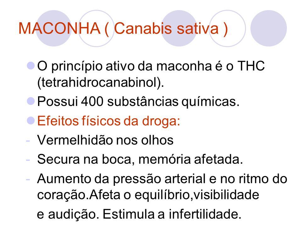 MACONHA ( Canabis sativa )