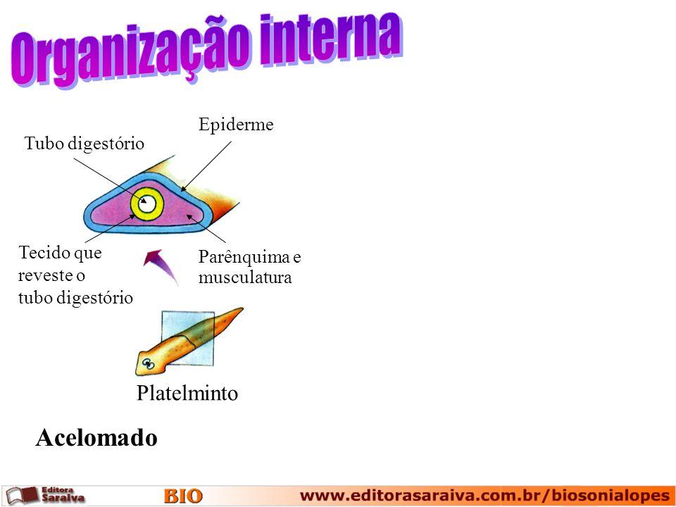 Organização interna Acelomado Platelminto Epiderme Tubo digestório