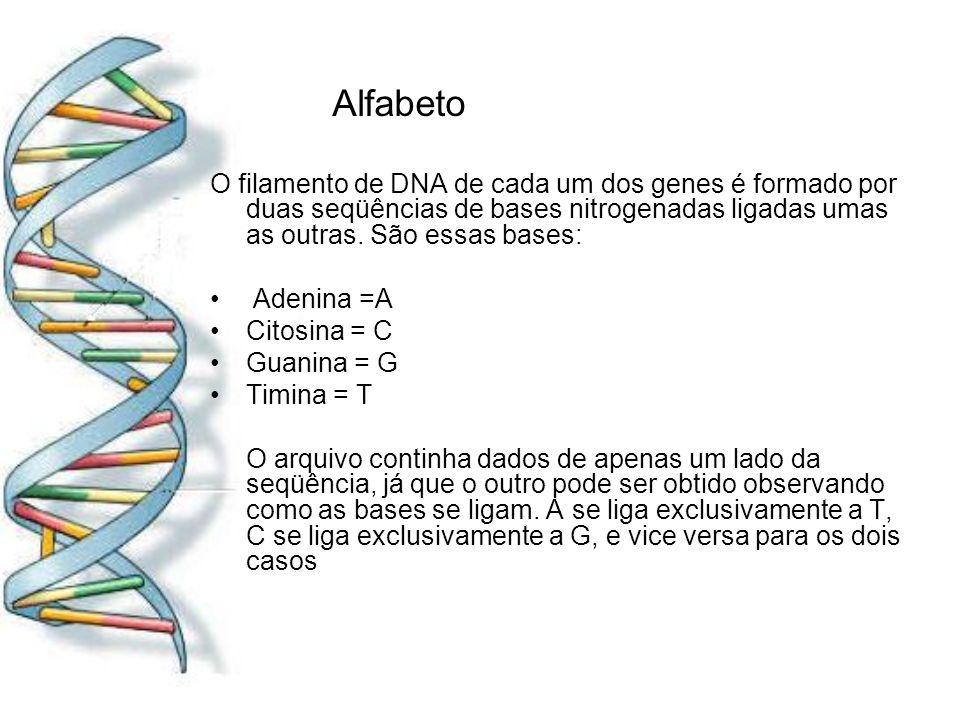 Alfabeto O filamento de DNA de cada um dos genes é formado por duas seqüências de bases nitrogenadas ligadas umas as outras. São essas bases: