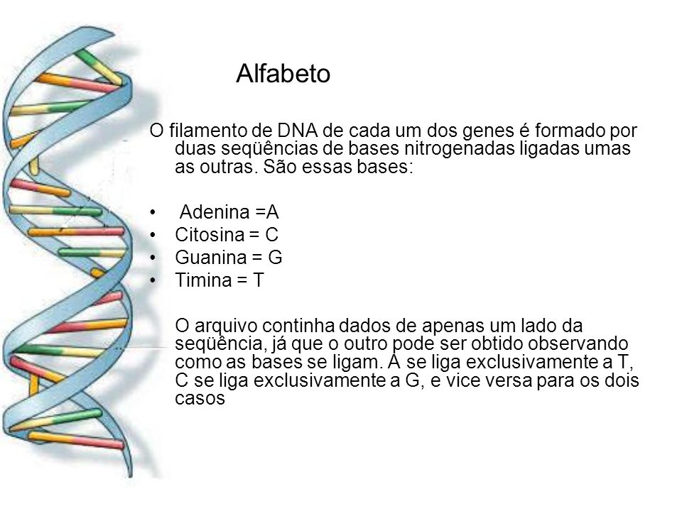 AlfabetoO filamento de DNA de cada um dos genes é formado por duas seqüências de bases nitrogenadas ligadas umas as outras. São essas bases:
