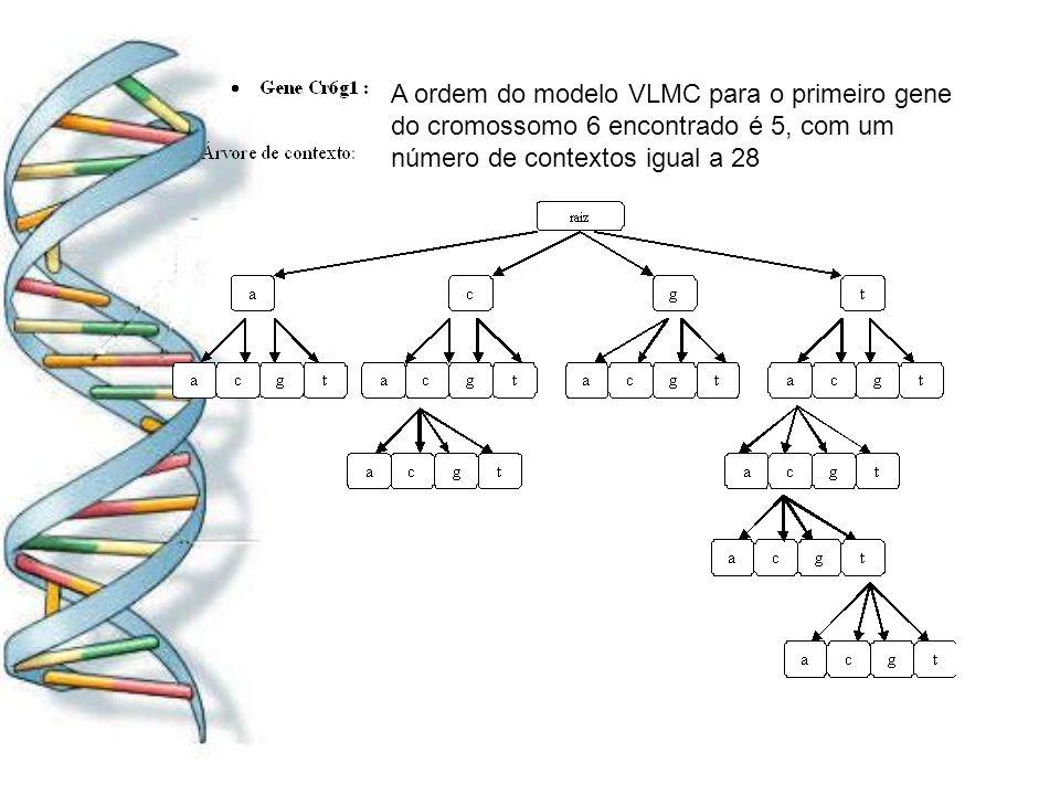 A ordem do modelo VLMC para o primeiro gene do cromossomo 6 encontrado é 5, com um número de contextos igual a 28