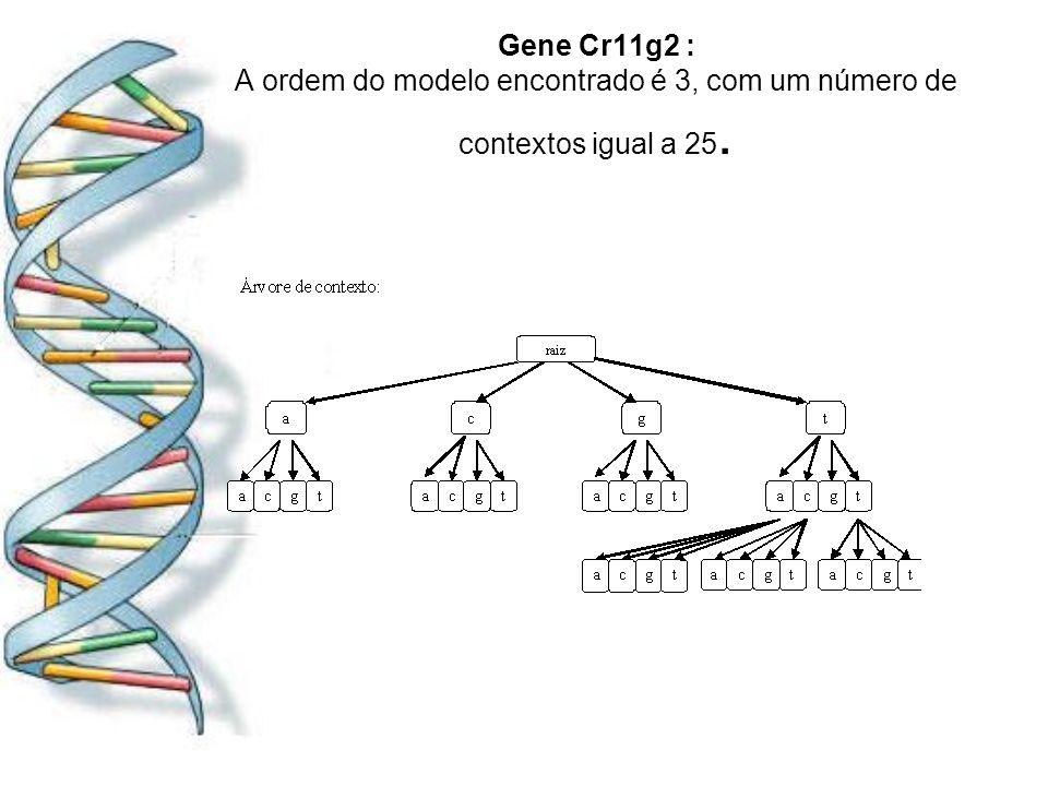 Gene Cr11g2 : A ordem do modelo encontrado é 3, com um número de contextos igual a 25.