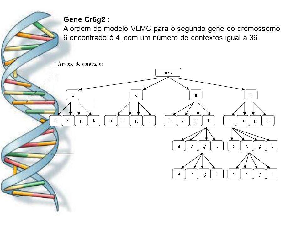 Gene Cr6g2 : A ordem do modelo VLMC para o segundo gene do cromossomo 6 encontrado é 4, com um número de contextos igual a 36.