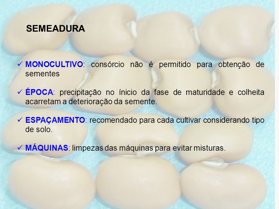 SEMEADURAMONOCULTIVO: consórcio não é permitido para obtenção de sementes.