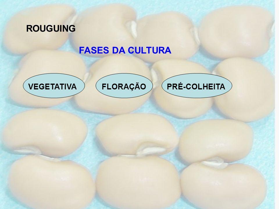 ROUGUING FASES DA CULTURA VEGETATIVA FLORAÇÃO PRÉ-COLHEITA
