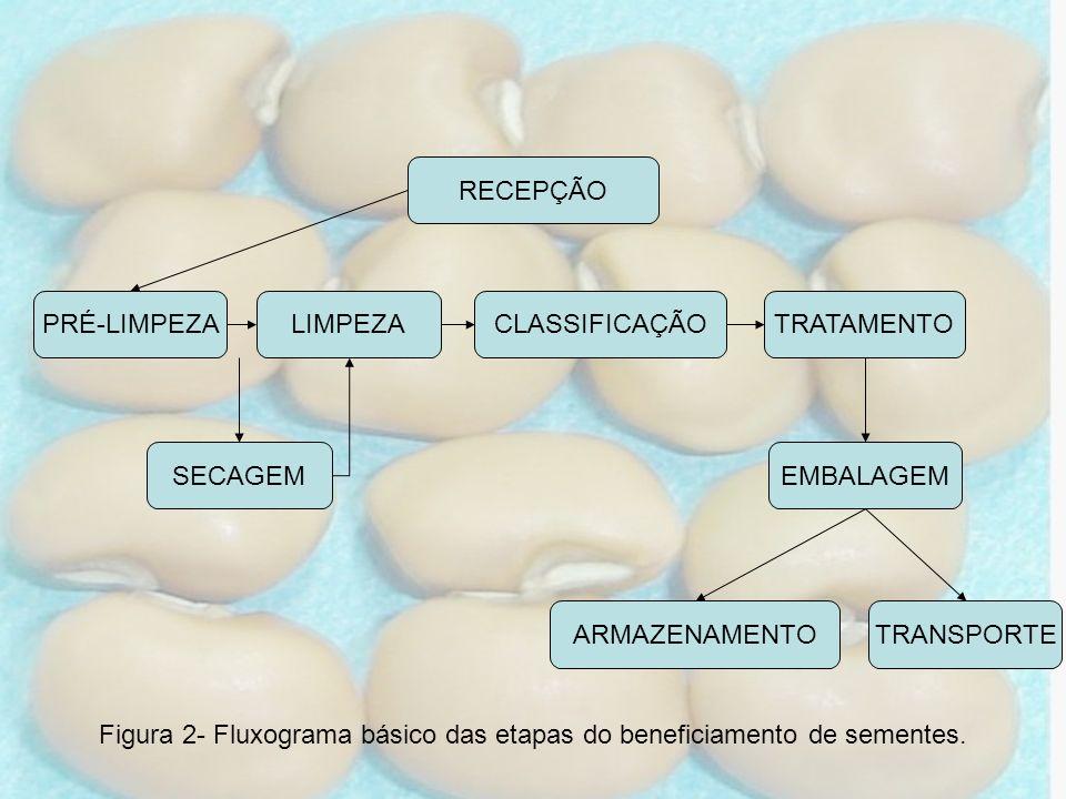 Figura 2- Fluxograma básico das etapas do beneficiamento de sementes.