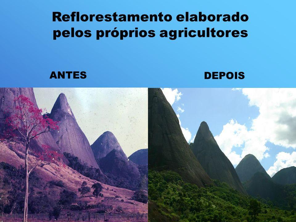 Reflorestamento elaborado pelos próprios agricultores