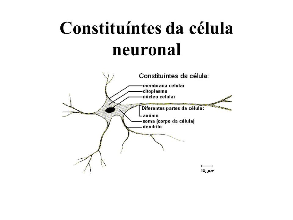 Constituíntes da célula neuronal