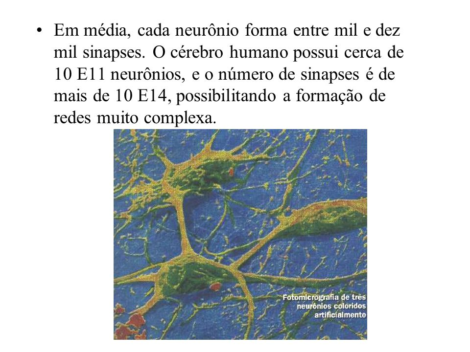 Em média, cada neurônio forma entre mil e dez mil sinapses