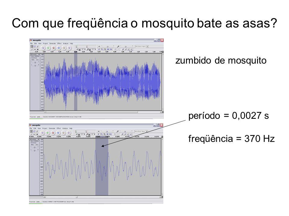Com que freqüência o mosquito bate as asas