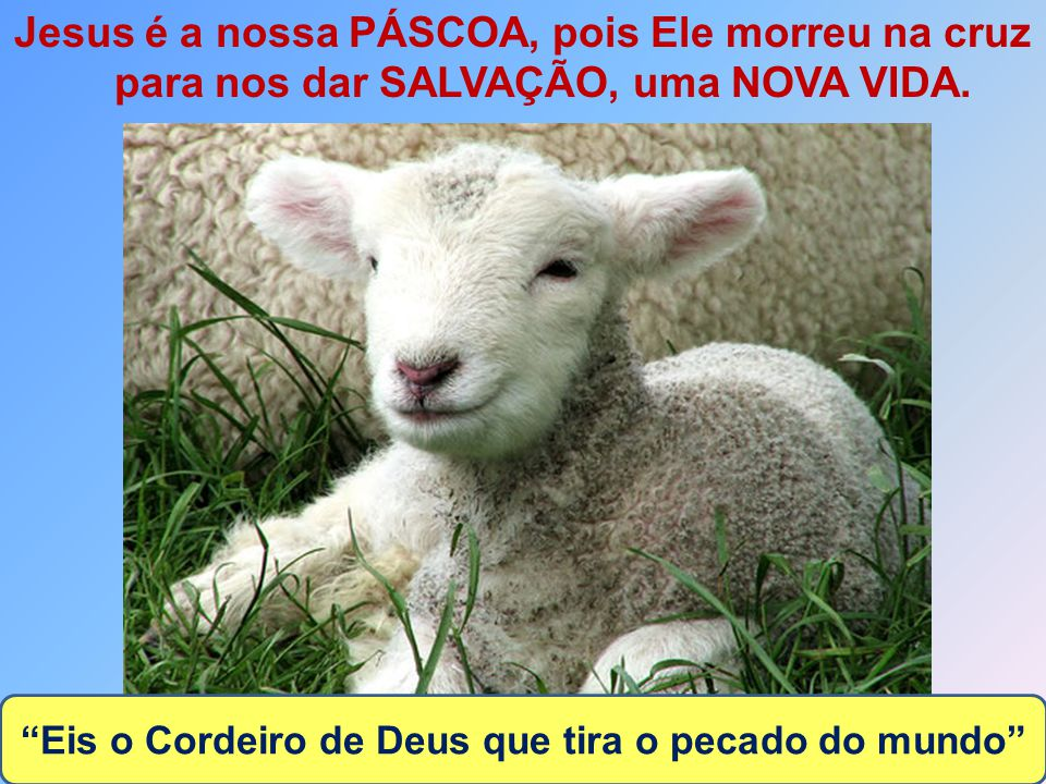 Eis o Cordeiro de Deus que tira o pecado do mundo