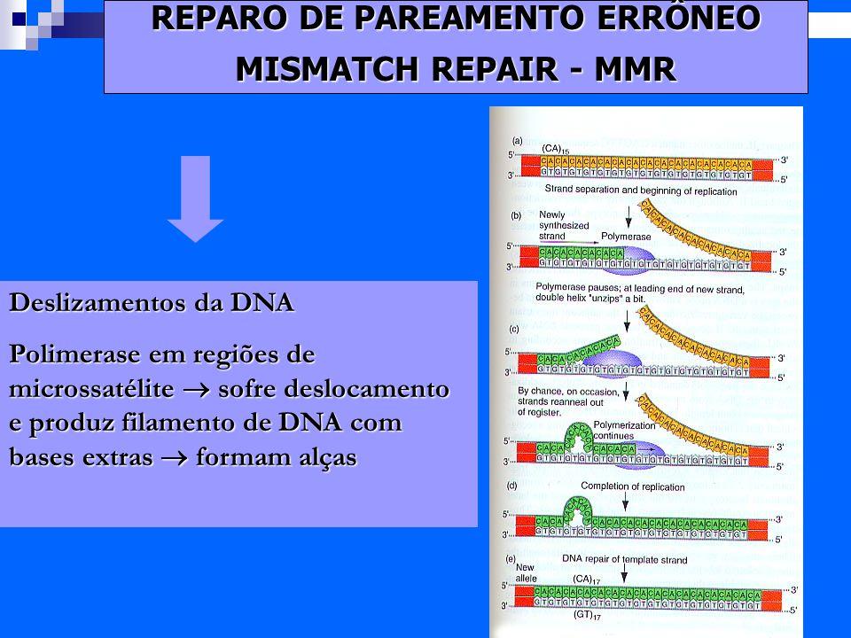 Exames de DNA: Quando justia deve solicitar nova