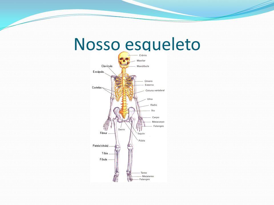 Nosso esqueleto