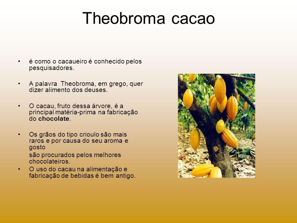 Theobroma cacao é como o cacaueiro é conhecido pelos pesquisadores.