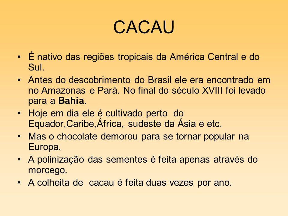 CACAU É nativo das regiões tropicais da América Central e do Sul.