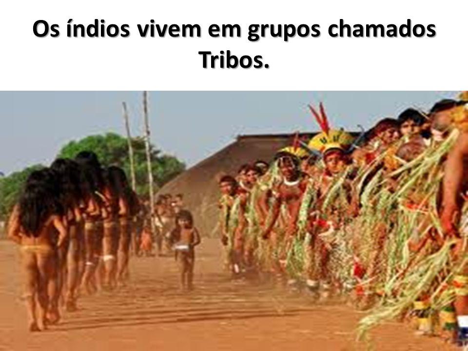 Os índios vivem em grupos chamados Tribos.