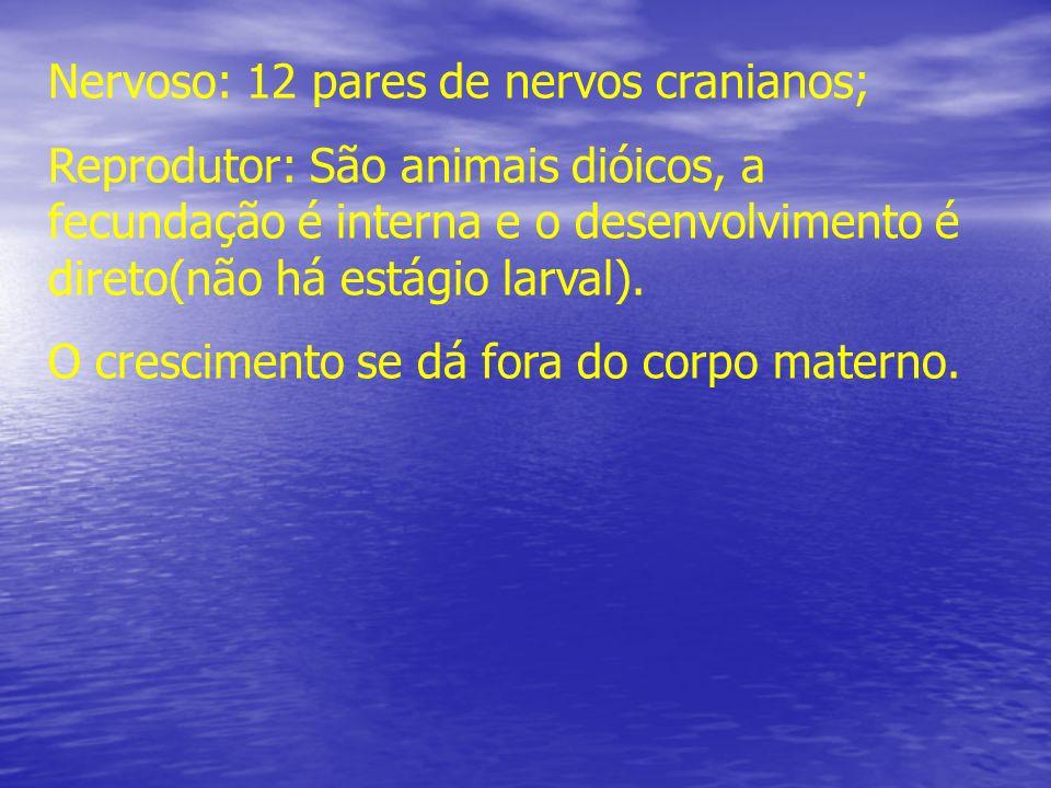 Nervoso: 12 pares de nervos cranianos;