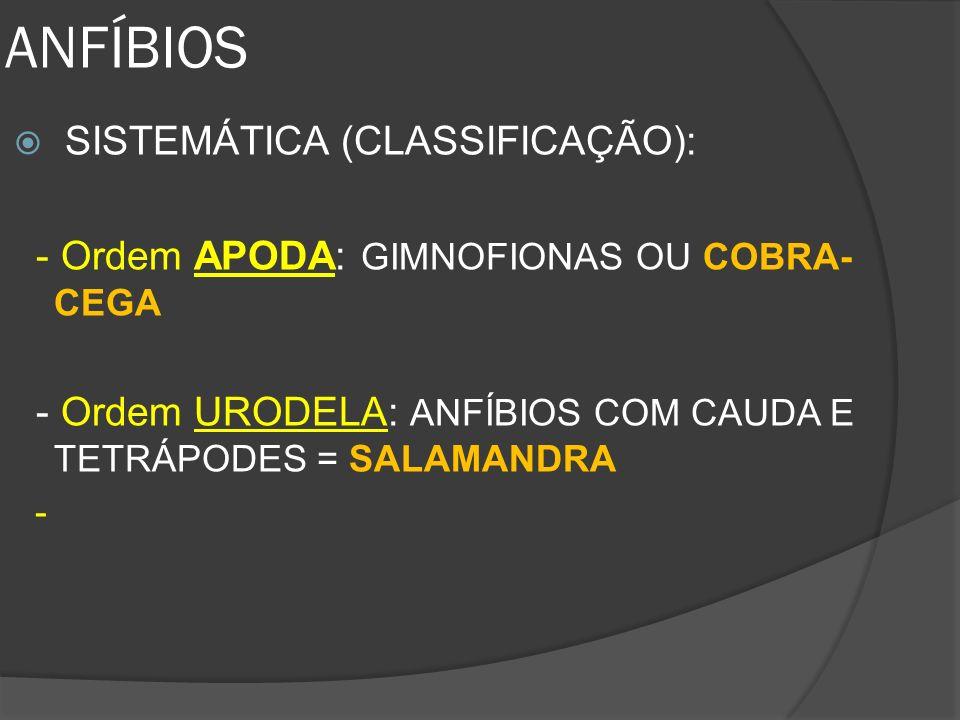ANFÍBIOS SISTEMÁTICA (CLASSIFICAÇÃO):