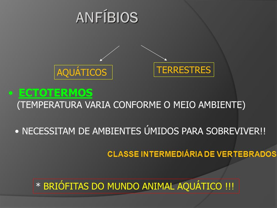 CLASSE INTERMEDIÁRIA DE VERTEBRADOS