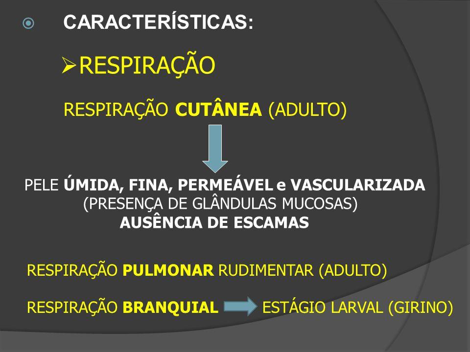 RESPIRAÇÃO CARACTERÍSTICAS: RESPIRAÇÃO CUTÂNEA (ADULTO)