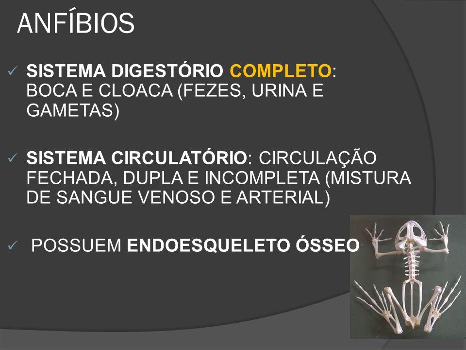 ANFÍBIOS SISTEMA DIGESTÓRIO COMPLETO: BOCA E CLOACA (FEZES, URINA E GAMETAS)