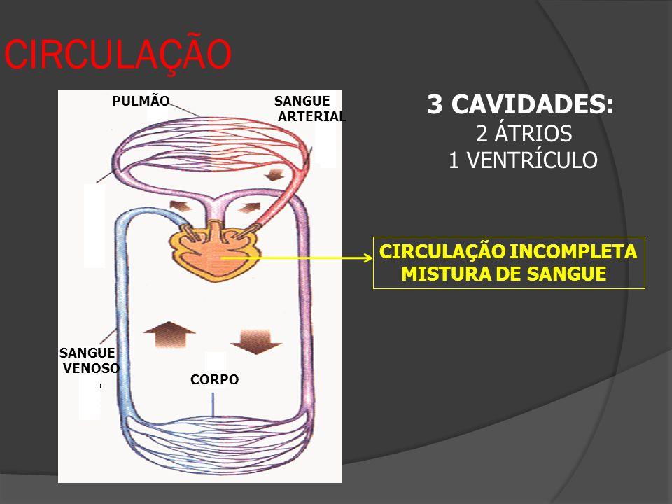 CIRCULAÇÃO 3 CAVIDADES: 2 ÁTRIOS 1 VENTRÍCULO CIRCULAÇÃO INCOMPLETA