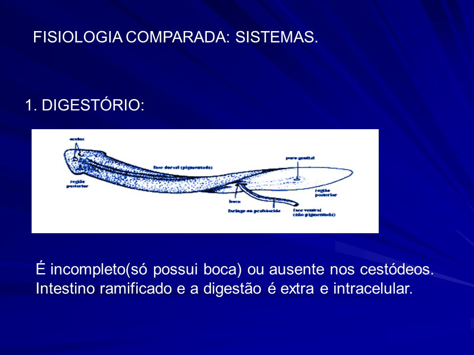 FISIOLOGIA COMPARADA: SISTEMAS.