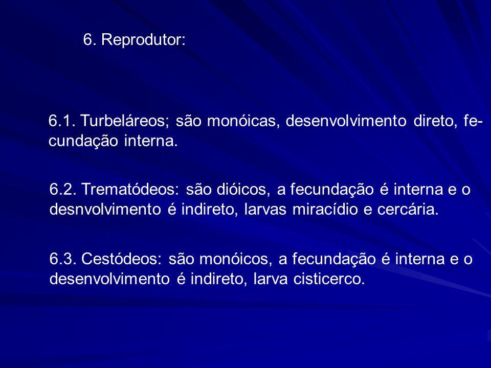 6. Reprodutor: 6.1. Turbeláreos; são monóicas, desenvolvimento direto, fe- cundação interna.