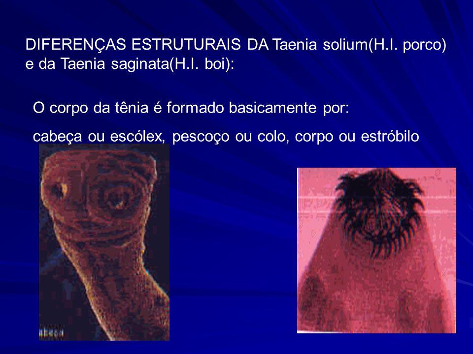 DIFERENÇAS ESTRUTURAIS DA Taenia solium(H. I