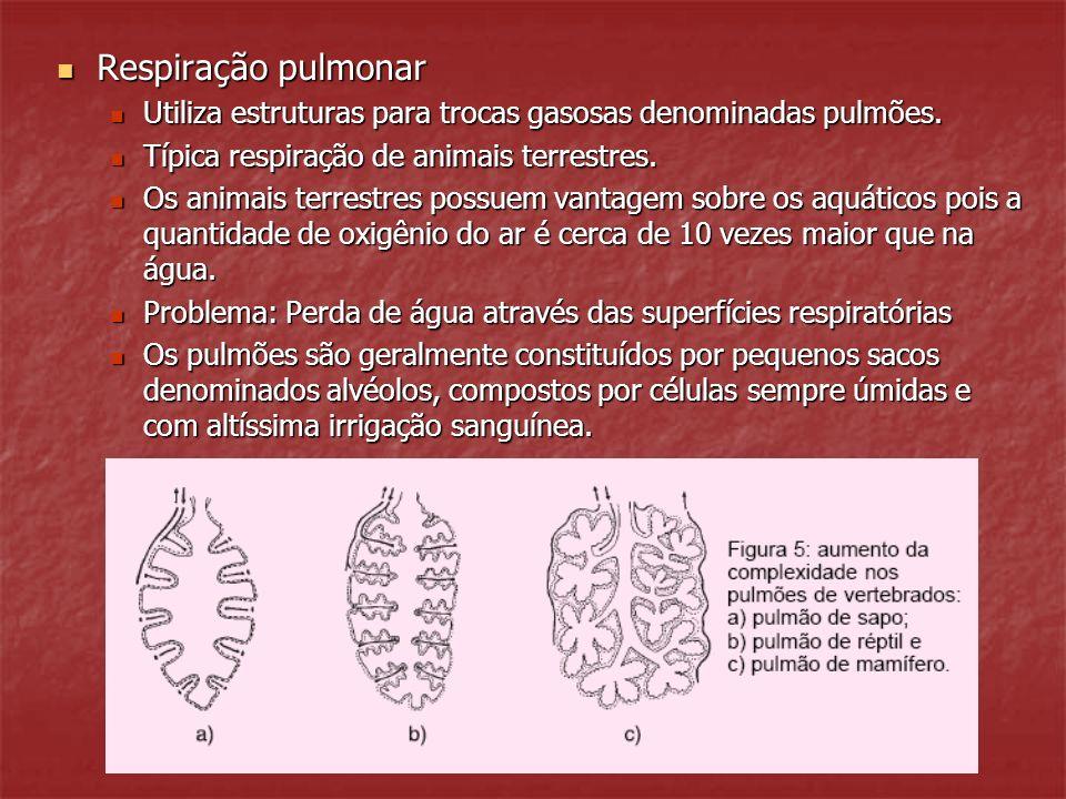 Respiração pulmonar Utiliza estruturas para trocas gasosas denominadas pulmões. Típica respiração de animais terrestres.