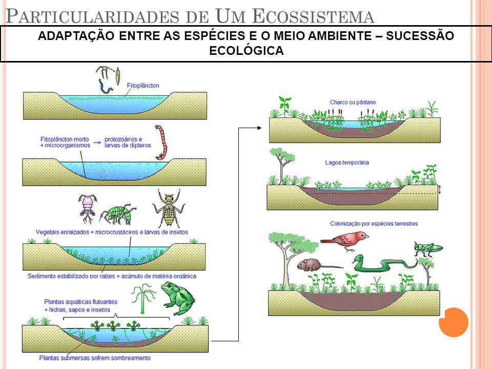 Particularidades de Um Ecossistema