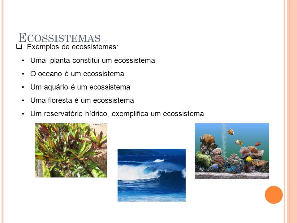 Ecossistemas Exemplos de ecossistemas: