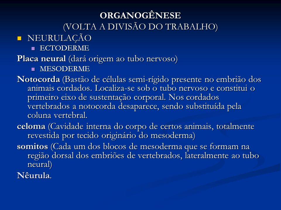 (VOLTA A DIVISÃO DO TRABALHO)