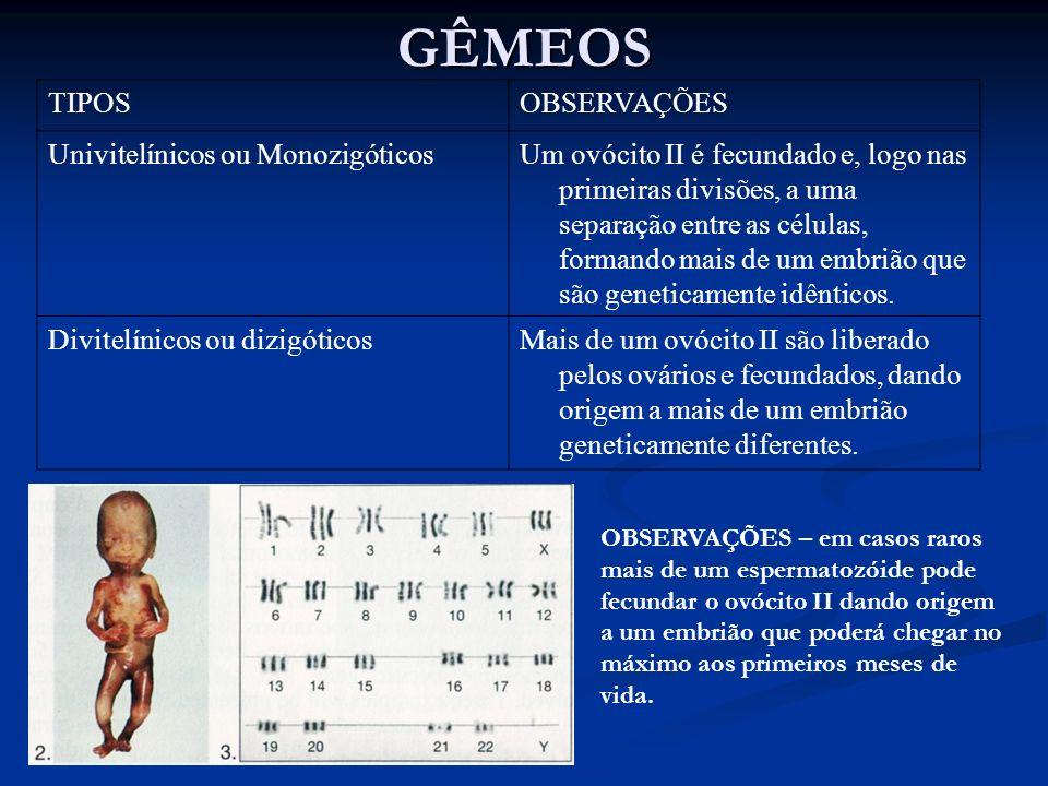 GÊMEOS TIPOS OBSERVAÇÕES Univitelínicos ou Monozigóticos