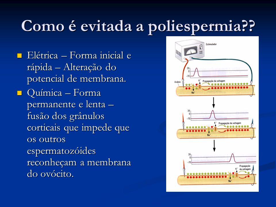 Como é evitada a poliespermia