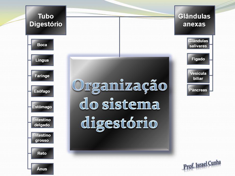 Organização do sistema digestório