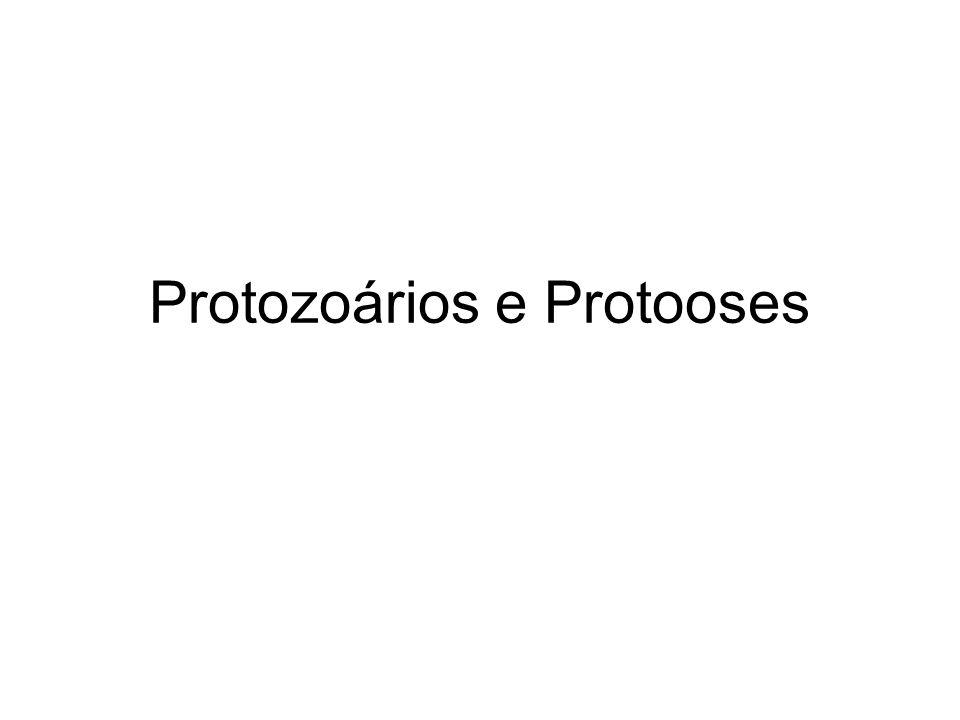 Protozoários e Protooses